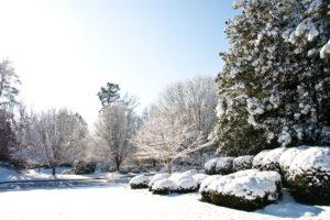 snow in a yard