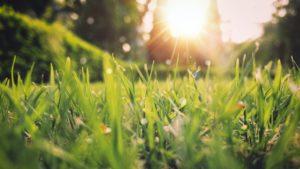grass closeup with sun